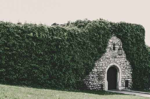 photo of brick wall tunnel beside bush